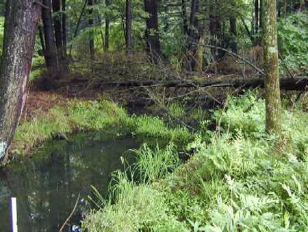 riparian wetland