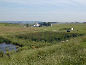 vegetation in wetland