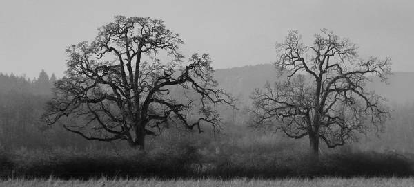 Winter Oaks - photo K. Godwin